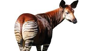 Lo que te puede ocurrir si sueñas con un okapi
