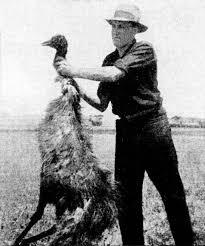 Guerra del Emú - Wikipedia, la enciclopedia libre